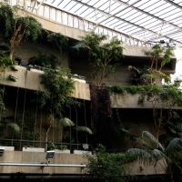 London Ramblings #4: The surprising Barbican Conservatory